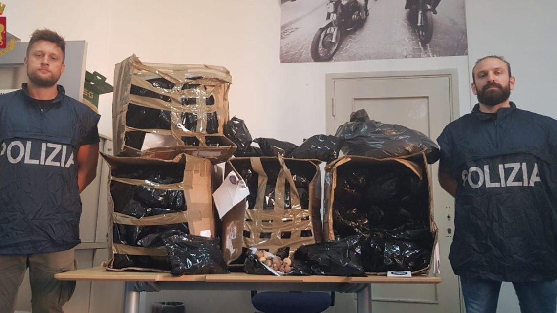Roma – Corriere sbaglia consegna e scatta indagine, sequestrati 34 chili di bulbi da oppio