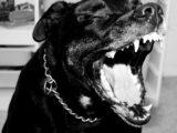 Bambina di sei anni aggredita da due cani, morsi alla testa e all'addome