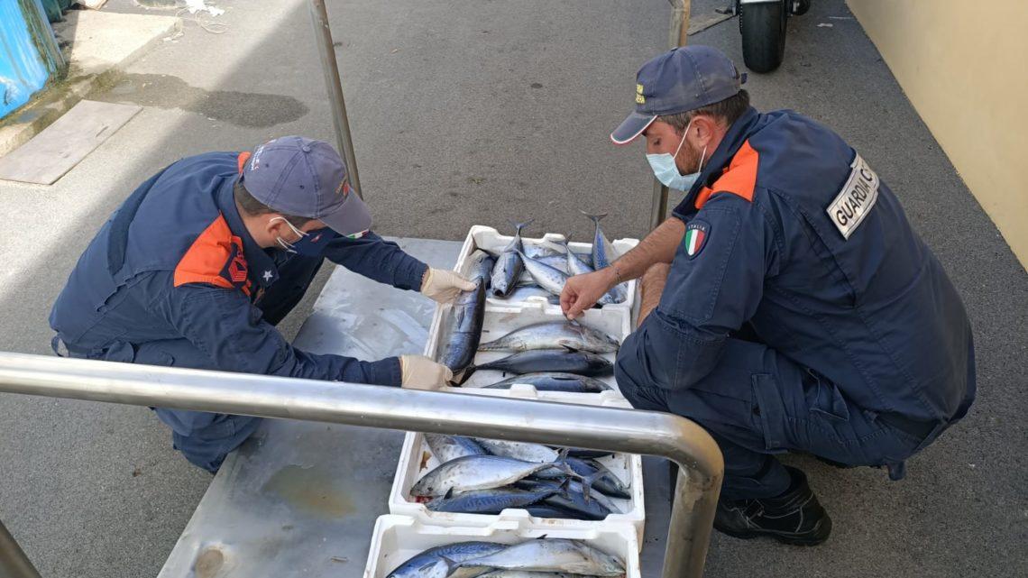 Gaeta – Sequestri su filiera della pesca e tutela demanio marittimo