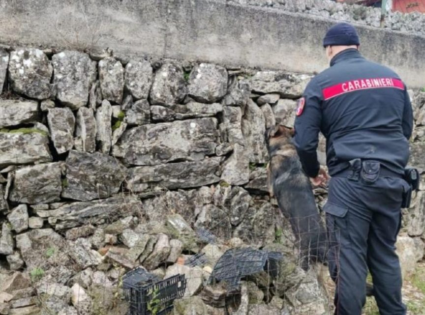 Perquisito dai carabinieri viene trovato con 71 grammi di hashish, 21enne arrestato a Castelnuovo Parano