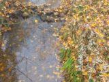 Il Vecchio Fiume Rapido di Cassino ridotto a pozzanghere, l'allarme di De Rosa e Perna