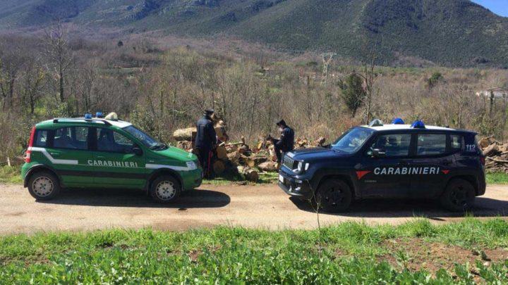 Mignano Montelungo – Tagliano legna senza autorizzazione, denunciati dai carabinieri che sequestrano bosco ceduo e trattore