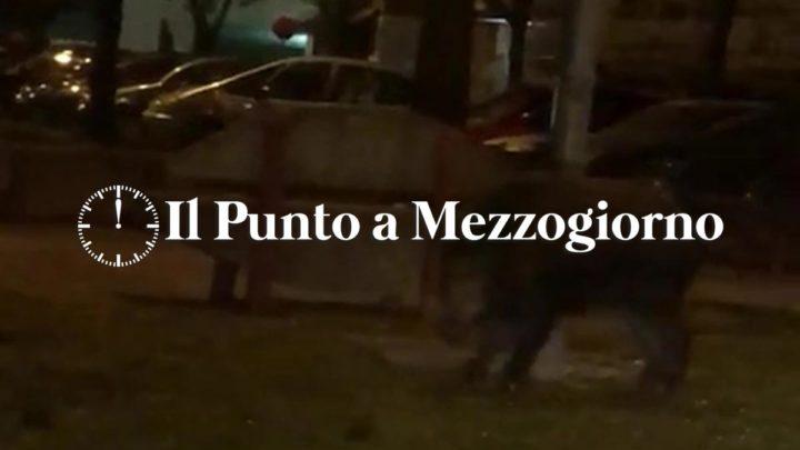 Cinghiali in strada a Cassino, grosso animale a spasso a piazza Restagno – VIDEO